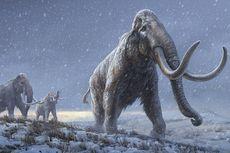 Gigi Mammoth Berusia Jutaan Tahun Ilmuwan Ungkap DNA Purba Tertua