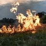 Dampak Sikap Tidak Bijaksana terhadap Tumbuhan bagi Lingkungan