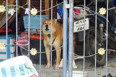 Anjing Setia Ini Menunggu Pemilik yang Meninggal karena Covid-19