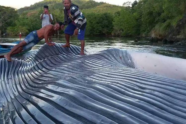 Bangkai paus dengan ukuran panjang 23 meter terdampar di perairan Des Soleh, Kecamatan Huamual Belakang, Kaupaten Seram Bagian Barat (SBB) Maluku, Senin (29/5/2017).