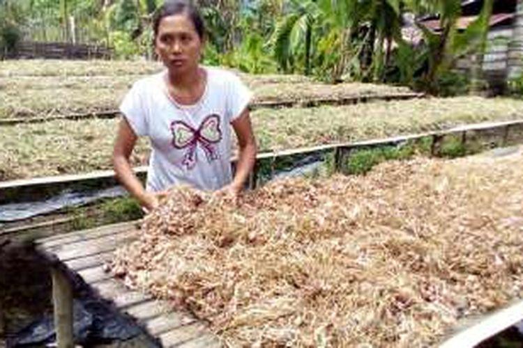 Rerata panen Philip bisa menyentuh angka 7 ton. Sekarang, dari tangan petani harga bawang per kilogram di Oba, Halmahera bagian tengah, Maluku Utara, senilai Rp 45.000.