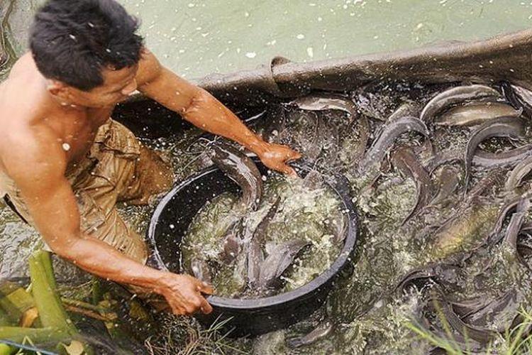 Hasil gambar untuk pakan ikan