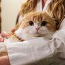 Ketahui, Ini 5 Alasan Kucing Mengeong Terus-menerus