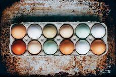 Bedanya Telur Bebek dengan Telur Ayam Kampung dan Ayam Ras