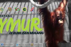 NAM Air Terbangkan Orangutan Taymur ke Kalteng