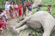 Diduga Tersetrum Jerat Kawat Listrik, Dua Ekor Gajah Mati
