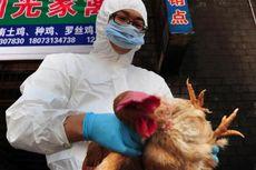 Muncul di Palembang, Berikut Awal Mula Kasus Flu Burung