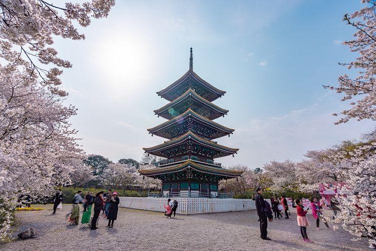 Ilustrasi Wuhan - Atraksi wisata bernama East Lake Cherry Blossom Park di area East Lake.