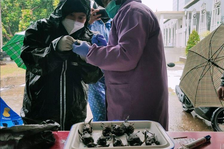 Sejumlah petugas Dinas Ketahanan Pangan, Pertanian, dan Perikanan Kota Cirebon Jawa Barat melakukan pengambilan sampel air liur burung, Selasa (14/9/2021) petang.