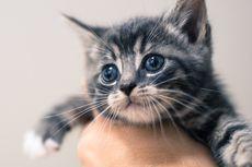 3 Cara Mengajari Anak Kucing Buang Air di Kotak Pasir