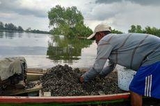 Bangkai Babi Mengapung di Danau, Nelayan Gatal-gatal