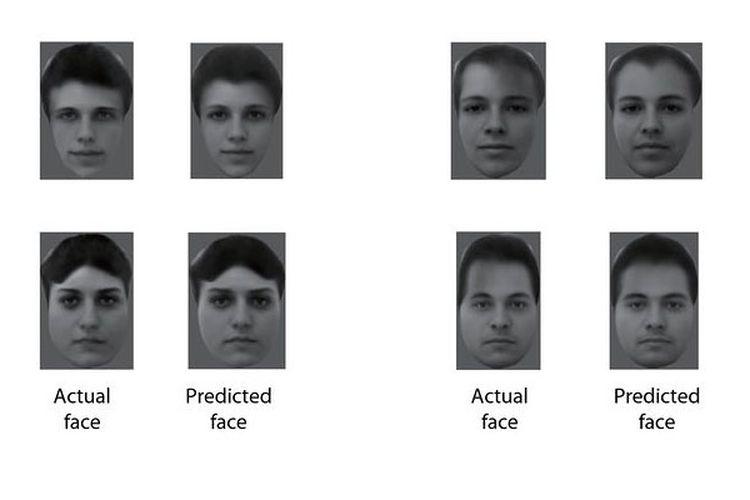 Wajah yang direka oleh para peneliti (predicted face) dibandingkan dengan wajah sebenarnya yang ditunjukkan kepada makaka