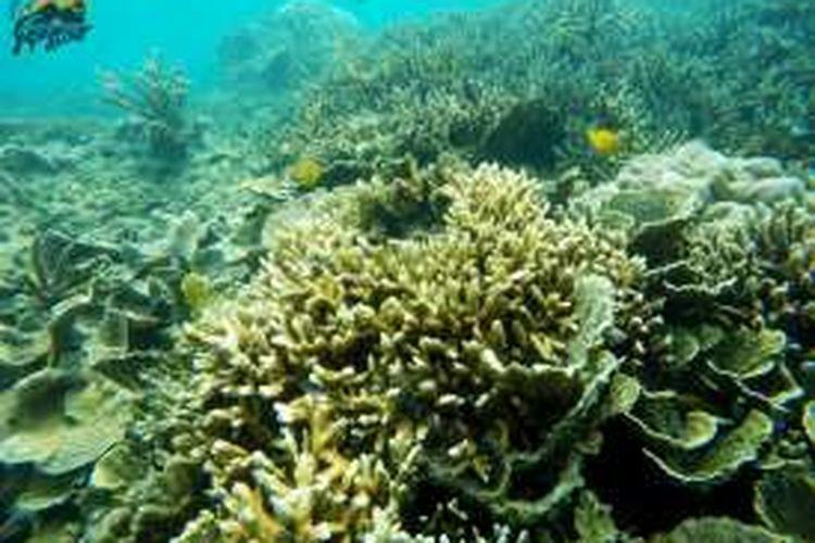 Pemandangan alam bawah laut Pulau Tunda, Banten.