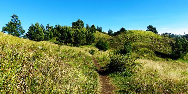 Padang Sabana di Gunung Prau yang melewati jalur pendakian via Dieng atau Kalilembu.