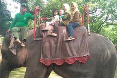 Libur Tahun Baru, Tiket Tunggang Gajah di KBS Habis Terjual