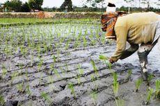 Kementan Tidak Jadikan Nilai Tukar Petani Tolak Ukur Kesejahteraan