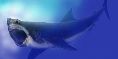 Ilustrasi Megalodon, hiu purba, hiu raksasa, hewan laut purba.