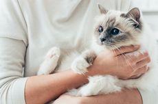 Kenapa Kucing Mengeong ke Kita? Ternyata Ini Alasannya
