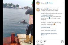 Video Viral Lumba-lumba di Perairan Pulau Pramuka, Ini Kata Dinas LH