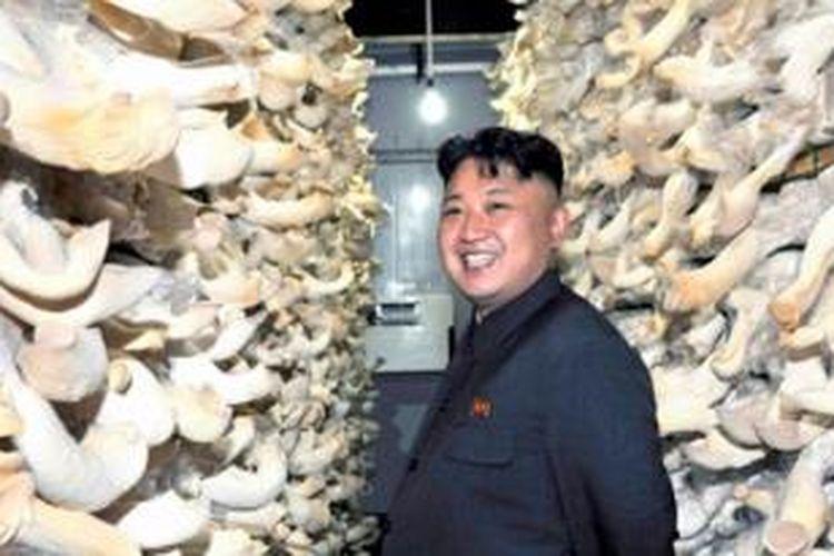 Pemimpin Korea Utara, Kim Jong Un  saat mengunjungi sebuah pabrik pengolahan jamur di negeri itu.