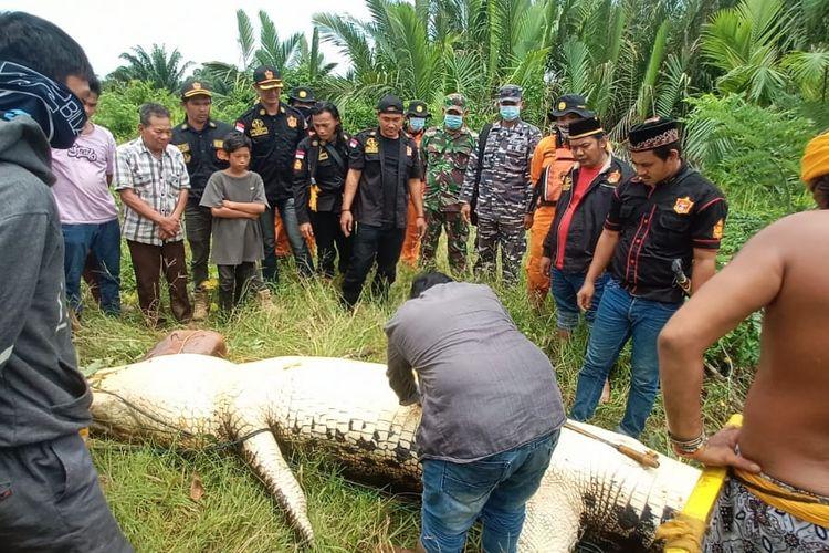 Suasana saat tim SAR gabungan Kutai Timur berhasil menangkap buaya dan membelah perut di Sungai Tempakul, Desa Muara Bengalon, Kecamatan Bengalon, Kutai Timur, Kaltim, Kamis (4/3/2021).