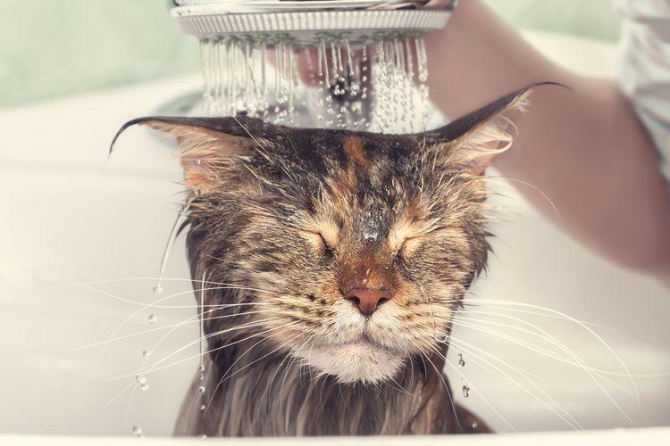 Ilustrasi kucing mandi, kucing