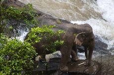 11 Ekor Gajah Liar di Thailand Ditemukan Mati Terjatuh dari Air Terjun