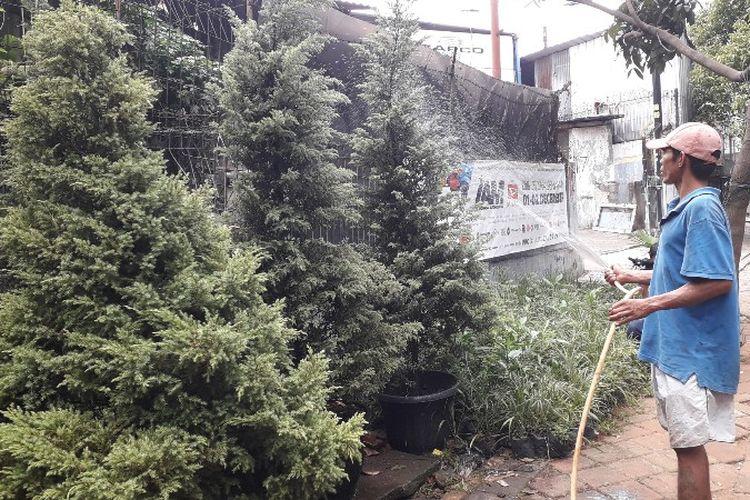 Jelang perayaan Hari Natal yang jatuh pada 25 Desember 2018 membawa keuntungan bagi pedagang pohon cemara, Abdullah di Jalan Arteri Kelapa Dua, Kebon Jeruk, Jakarta Barat.