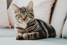Waspada! Ini Pertanda Kucing Harus Segera Dibawa ke Dokter Hewan