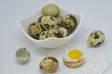Manfaat dan Kandungan Telur Puyuh, Termasuk Gizi, Kalori dan Kolesterol