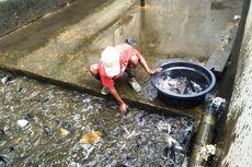 Ratusan Ikan di Cianjur Mati Mendadak Diduga Akibat Aeromonas