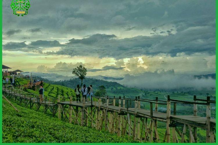 Jembatan yang melintang di atas kebun teh Wayang Windu Panenjoan