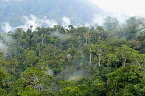 Tambang dan Kebun Punahkan Mata Pencaharian Warga Adat Kalimantan