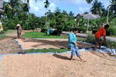 Hindarkan Petani dari Tengkulak, UPJA Ini Beli Langsung GKP ke Petani