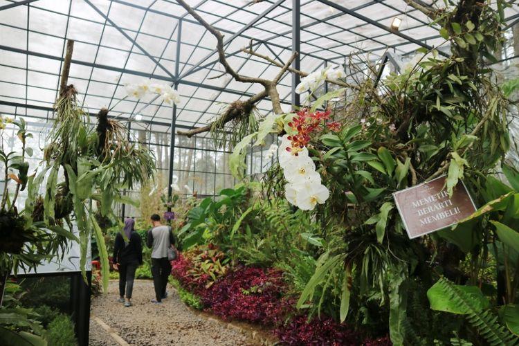Selain menikmati anggrek wisatawan juga bisa belajar serba serbi anggrek, di Orchid Forest, Lembang, Bandung, Rabu (1/7/2018).