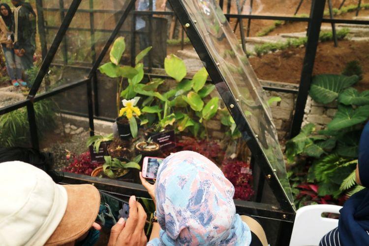 Wisatawan melihat dan mengabadikan salah satu anggrek langka di Orchid Forest, Lembang, Bandung, Rabu (1/7/2018).