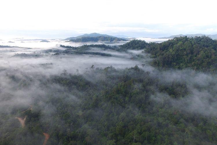 Pemandangan alam di KEE Wehea-Kelay, Kalimantan Timur.