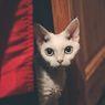 4 Alasan Kucing Suka Berada di Tempat Sempit