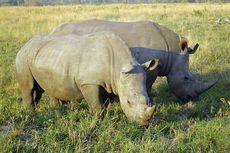 Perburuan Badak di Afrika Selatan Turun Berkat Lockdown Covid-19