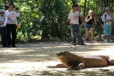 Dirut BOPLBF: Tak Ada Rencana Pemindahan Desa, Warga Komodo Tetap di Pulau Komodo