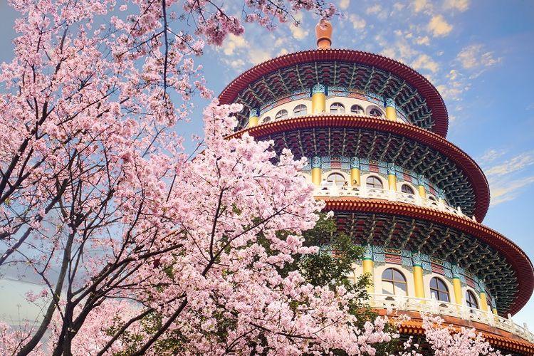 Ilustrasi Taiwan - Pemandangan bunga sakura di sebuah taman di Taipei.