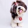 10 Ras Anjing yang Pendiam, Tidak Suka Sering Menggonggong