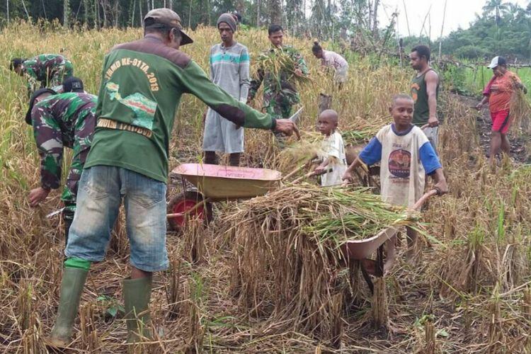 Satgas Yonif 405/Surya Kusuma dan Kelompok Tani Anren melakukan panen padi gogo di Kampung Imko, Distrik Mindiptana, Kabupaten Boven Digoel, Sabtu (15/07/17).