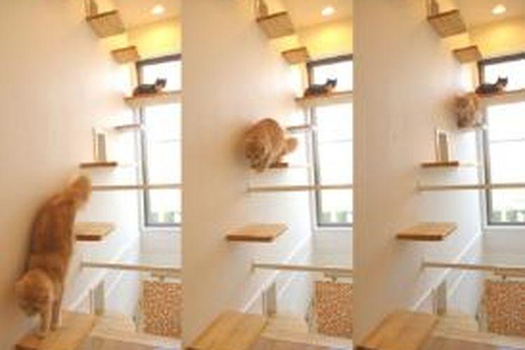 Memelihara kucing dalam rumah, sama artinya dengan menyiapkan ruangan ekstra untuk mereka.