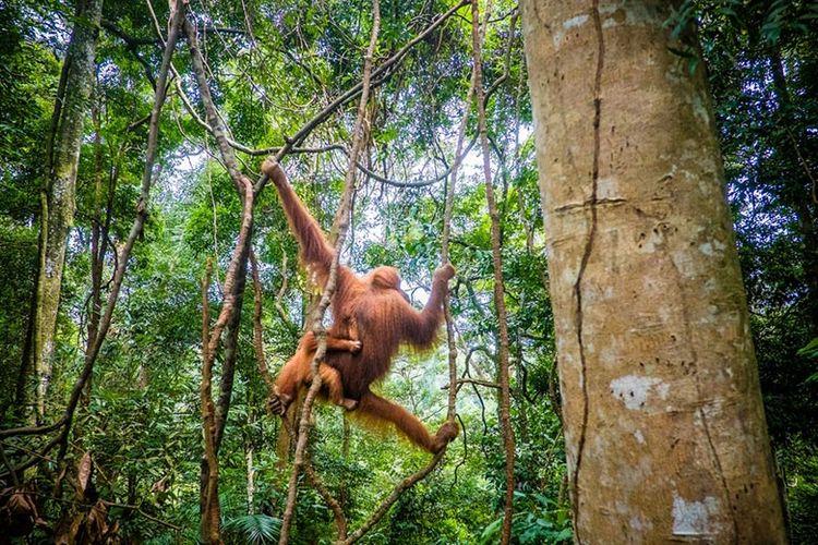 Flora Dan Fauna Asia Tenggara