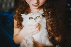 Panduan Mengetahui Perbandingan Umur Kucing dan Manusia