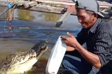 Indonesian Man Forms Bond With Crocodile in East Kalimantan