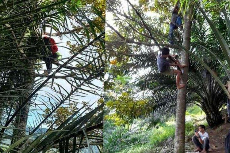 Sejumlah siswa di Kabupaten Simalungin terpaksa memanjat pohon untuk mencari sinyal. (Dokumentasi: Facebook Renni Rosari Sinaga).