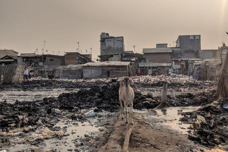 Seekor kambing yang berusaha mencari makan di tengah-tengah lautan sampah yang mengitari Kampung Bengek