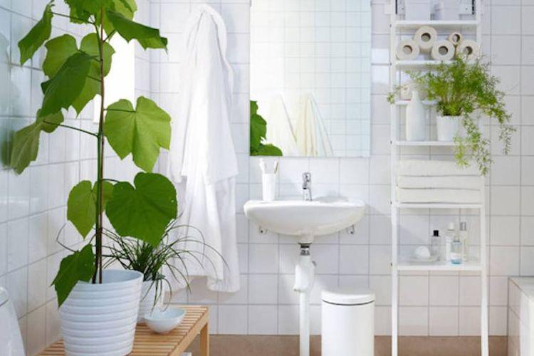Tanaman hijau membantu membersihkan udara kamar mandi.